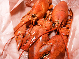 Close-up of cooked lobsters