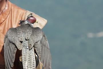 Faucon et fauconnerie