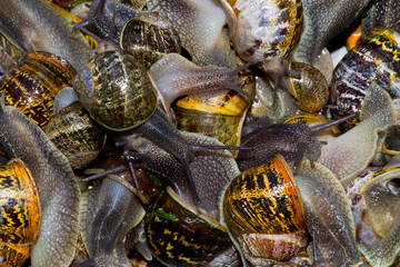 Dozens of snails