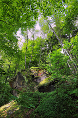 Spring Forest with Sandstone Rocks in Bohemian Paradise
