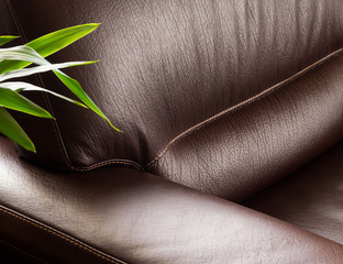 Leather Sofa with Plant