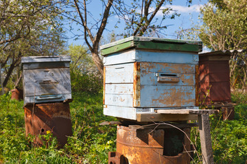 hive  bees
