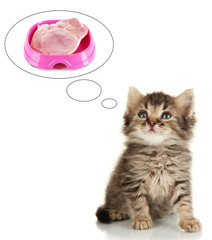 Small kitten dreaming of meat, isolated on white
