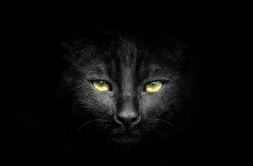 Black cat potrait