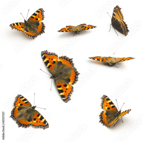 Deurstickers Vlinder butterfly set