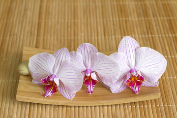 Orchids on bamboo mat abstract asian food unique concept