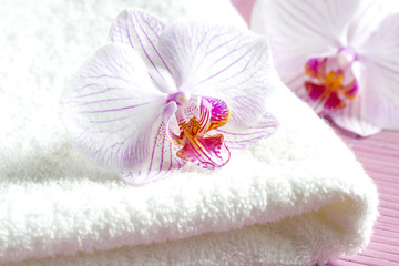 Pink orchids and spa aromatherapy abstract still life