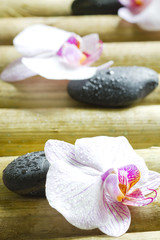 Zen stones with orchid abstract closeup still life