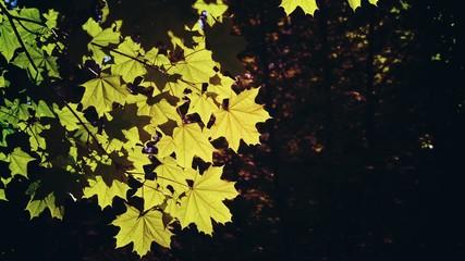 Autumn leaves on a tree.