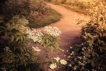 Nature trail and blooming bushes