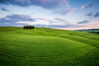 Toscana, paesaggio rurale con cipressi al tramonto