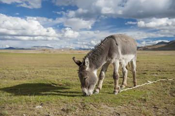 donkey enjoy eating