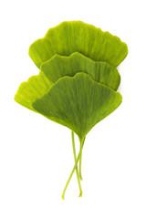 Ginkgo biloba leaf isolated on white