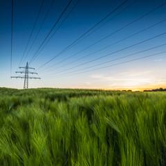 Strommast im Sonnenuntergang mit Kornfeld