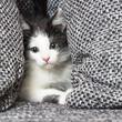 canvas print picture - Katzen baby versteck sich