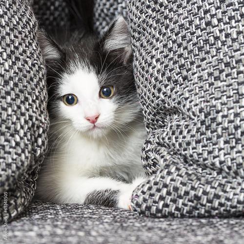 canvas print picture Katzen baby versteck sich