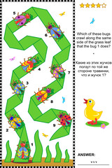 Visual puzzle with beetles and bugs
