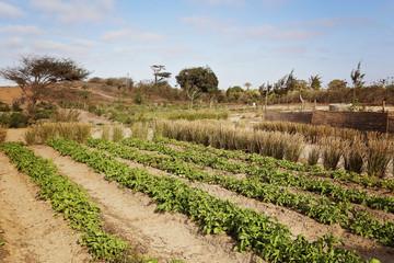 potager (Afrique)