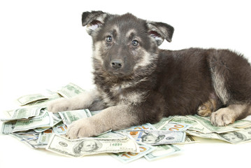 Buying a Puppy?