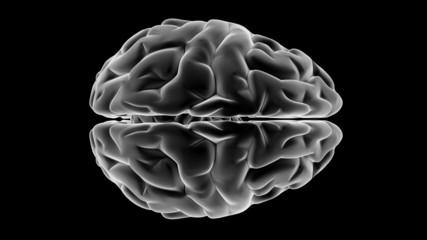 Xray Brain