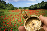 traveller with compass in the field of poppies
