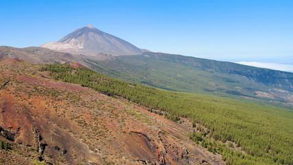 Teide and La Oratava forest