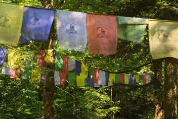 Gebetsfahnen im Wald