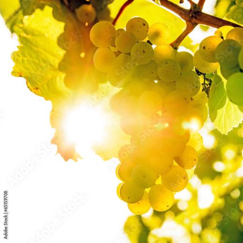Weinrebe im Gegenlicht bei Sonnenuntergang - 65159708