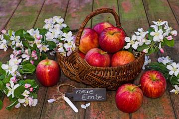 Apfelkorb mit Schild auf Holz, neue Ernte
