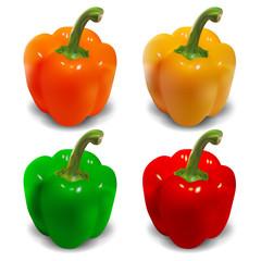Bell pepper vector - orange, yellow, green, red