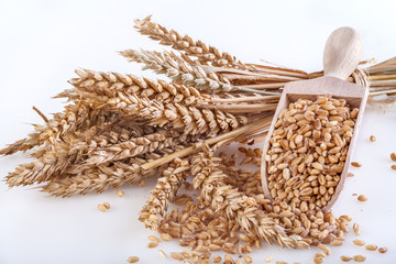 Ripe wheat with a wooden spatula on white background