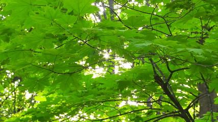 Slider shot in the springtime forest.