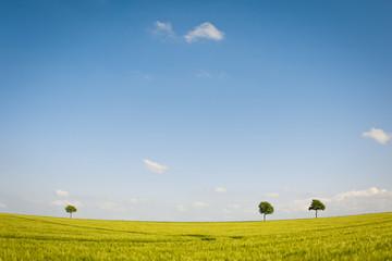 Weites Land und ein grünes Weizenfeld unter bestem Sommerhimmel