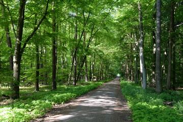 Waldweg im Frühling © Fotolyse
