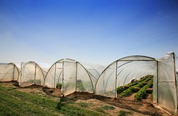 Landwirtschaft Erbeeranbau