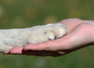 Friends - hand and paw