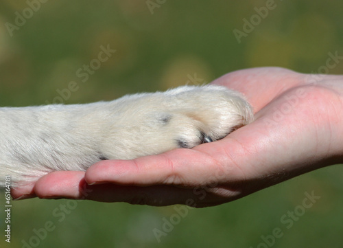 canvas print picture Friends - hand and paw