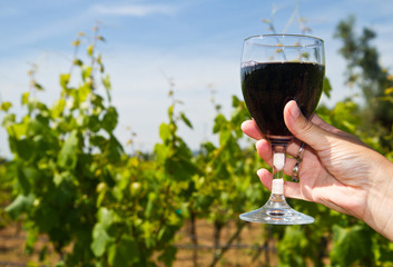 Glass of wine in the hand against vineyards