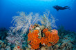 Diver and Caribbean Reef - 65169555