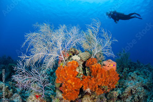Diver and Caribbean Reef