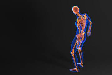 Human skeleton. Rear view. Contains clipping path