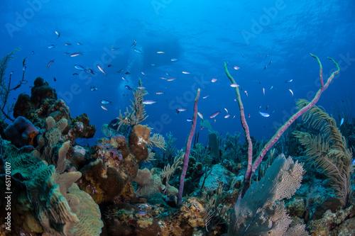 Caribbean Coral Reef 4