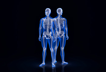 Human skeleton. Front and back view. Contains clipping path