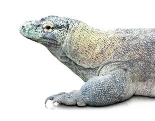 Komodo dragon or Varanus komodoensis