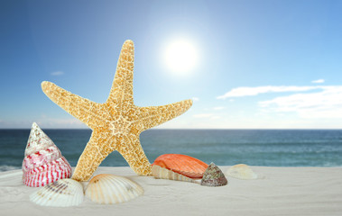 starfish with sea shells