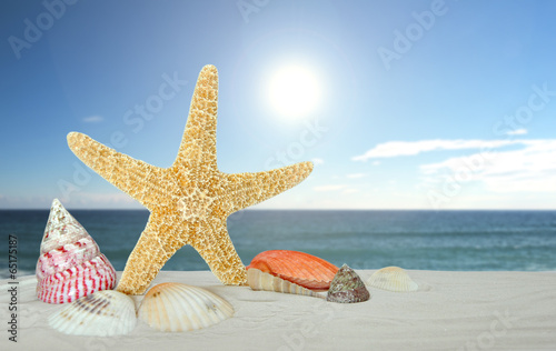 starfish with sea shells - 65175187