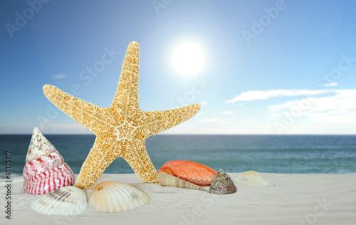 starfish with sea shells - 65175187