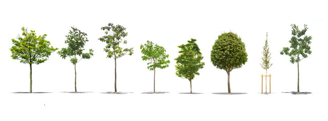 Pack of beautiful green trees isolated on white background