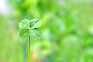 A four leaf clover