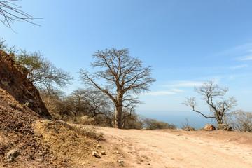 Baobab near Mirbat, Dhofar region (Oman)